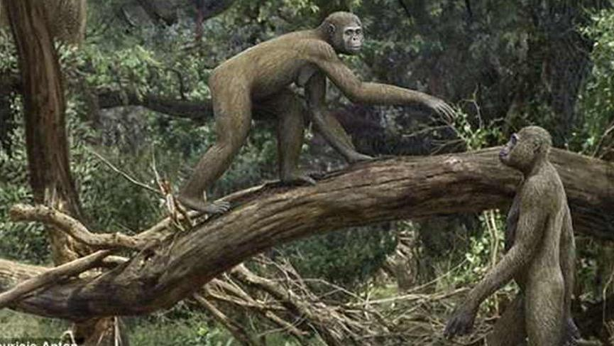 4,4 milyon yaşındaki 'Ardi' nin pelvisi, ağaçlara tırmanıp, insan gibi dik yürüyebildiğini ortaya koydu