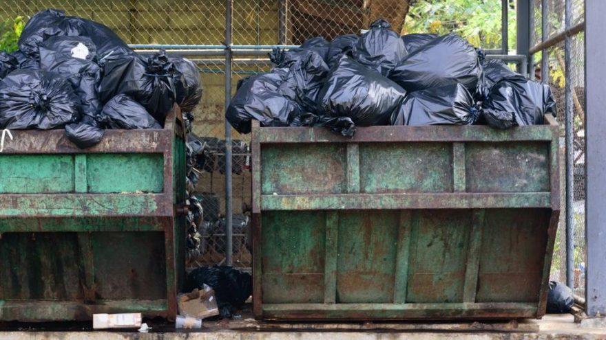 Atık sorunu çözülüyor! Bütün çöpleri yiyecekler…