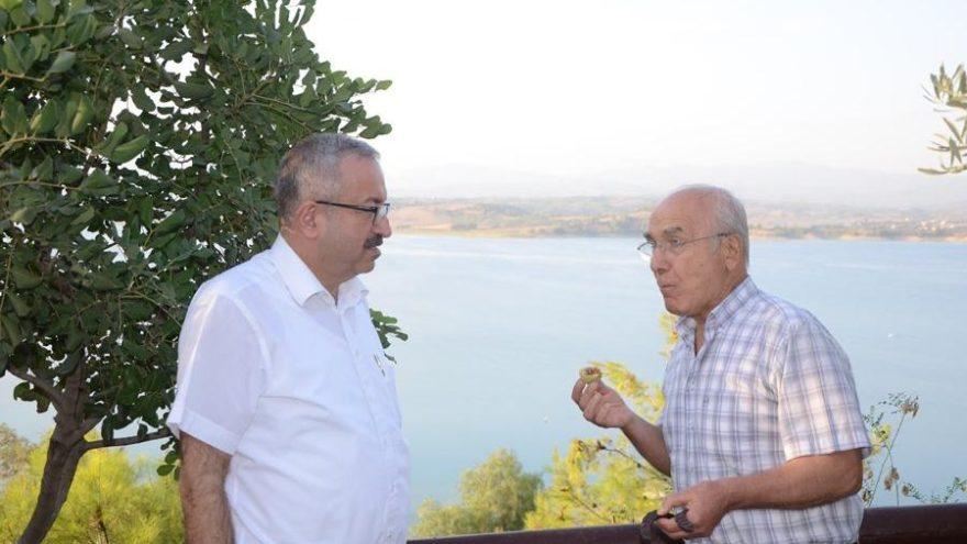 'Adana'yı harnup ağaçlarıyla donatalım'
