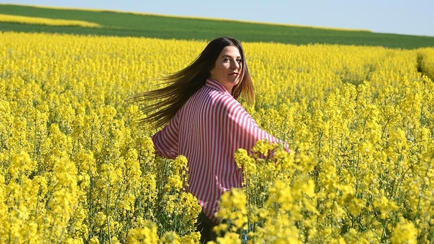 Kanola tarlaları Trakya'yı sarıya boyadı