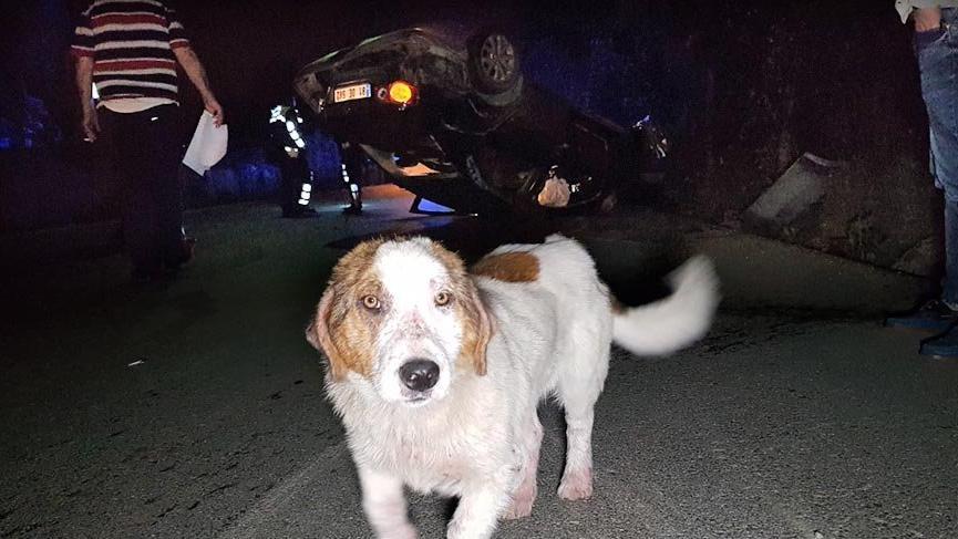 Köpeğe çarpmamak için manevra yapan sürücü elektrik direğine çarptı