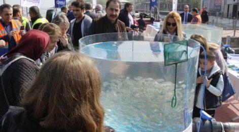 İzmit Körfezi'ne 6 bin balık yavrusu bırakıldı