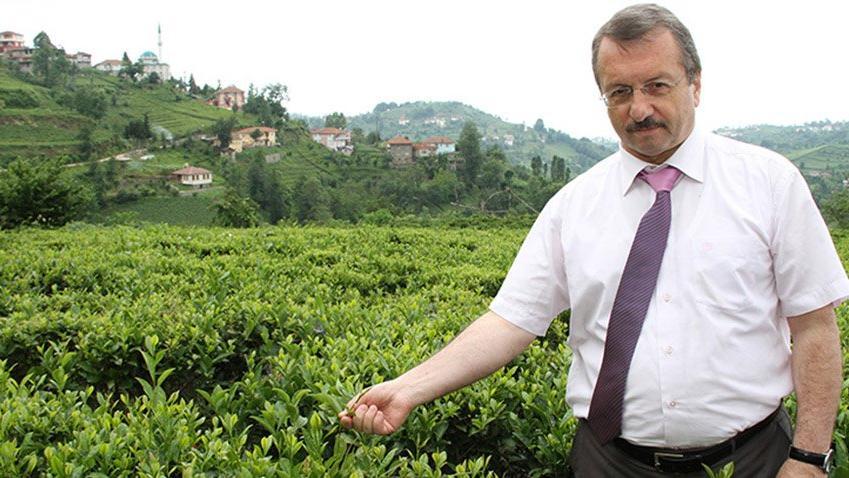 Küresel ısınma: Çay hasadı bir ay öne çekildi