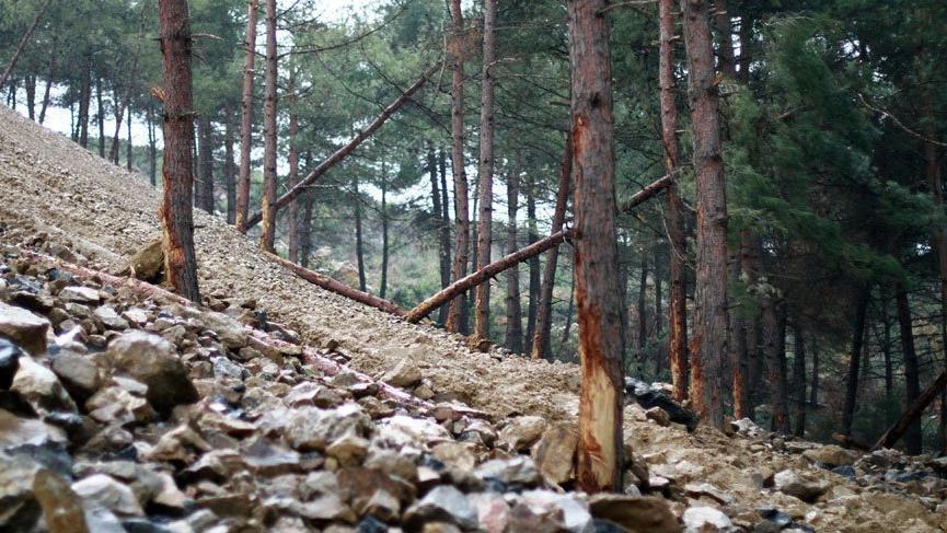 Ormanlar 5 yıllığına satışa çıkarılacak