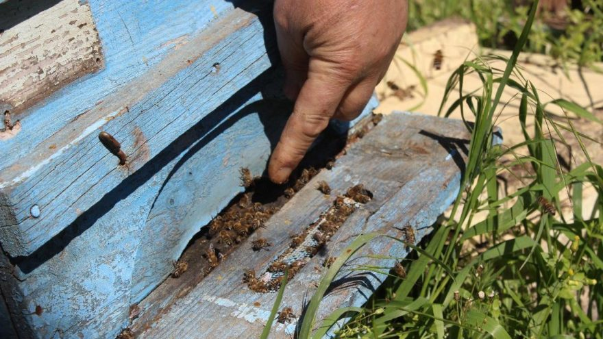Bursa'da arı ölümleri artarak devam ediyor