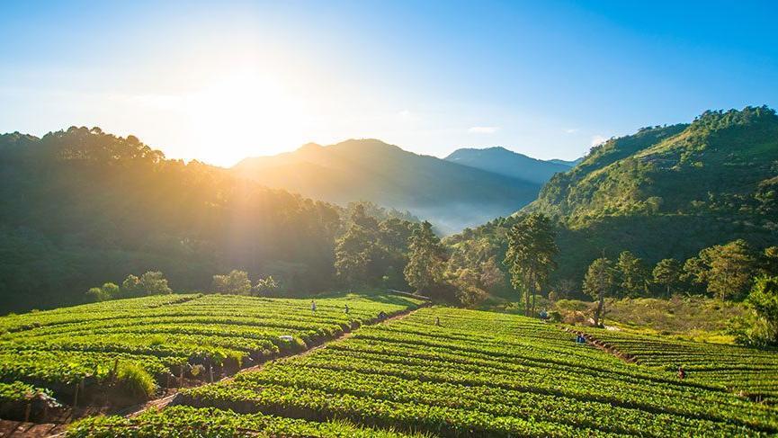 Genç çiftçi hibe başvuru şartları neler? Genç çiftçiler için 30.000 TL hibe başvuruları başladı…