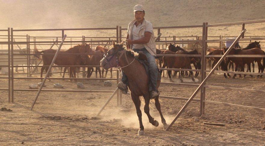 FOTO:DHA - Kazak seyisler tarafından yakalanan atlar bir bölgede koruma altına alınmıştı.