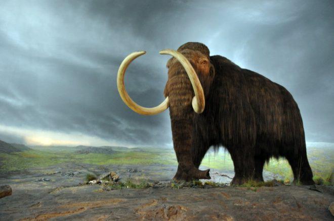 mamut-shutter-1