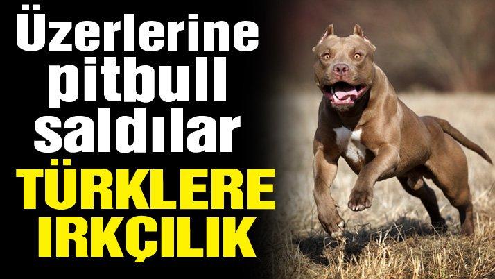 Almanya'da Türklere pitbull köpekli saldırı