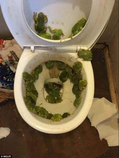 tuvalet-imgur