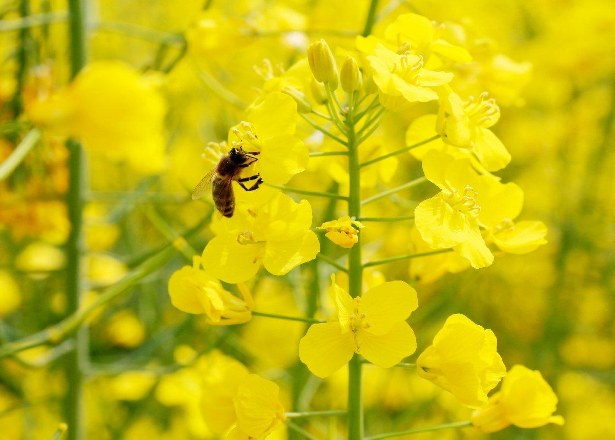 arı site:sozcu.com.tr ile ilgili görsel sonucu