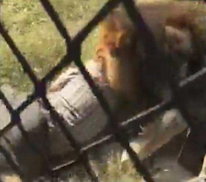 aslan-video-1