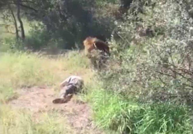 aslan-video-5