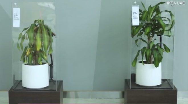 bitki-video