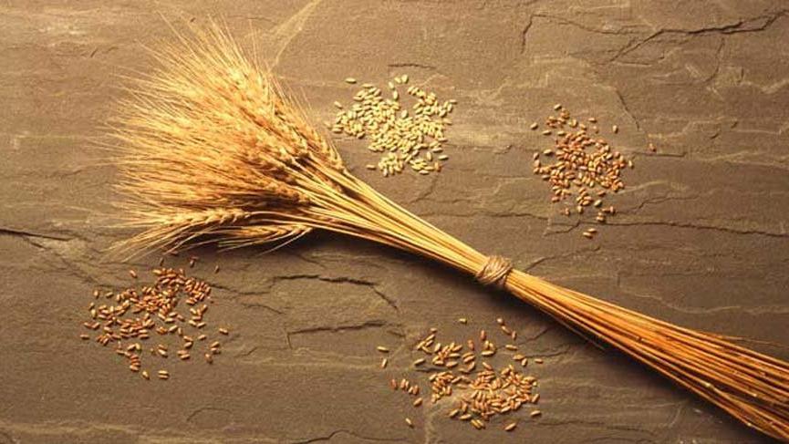 Buğday taban fiyatı çiftçiyi memnun etmedi
