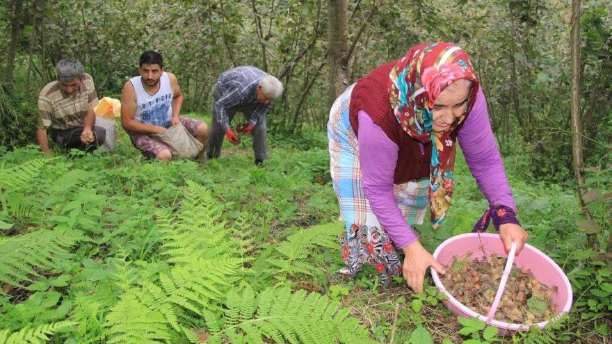 Ferrero: Fındık ağaçlarını sökmeyin sadeleştirin