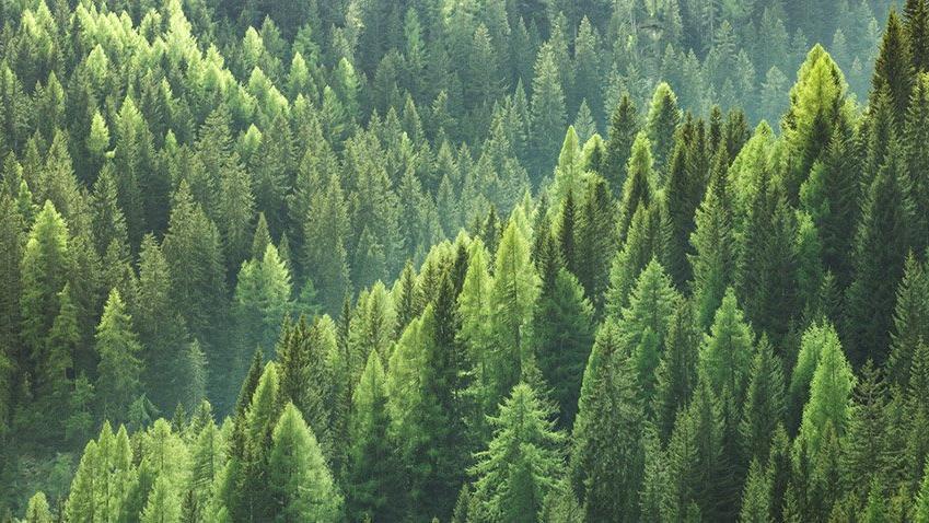 Orman imar yasası emekli ikramiyesiyle aynı pakette