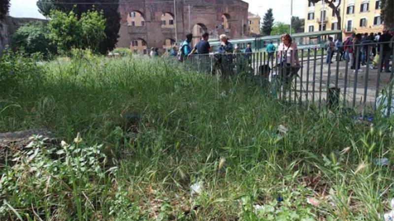 Belediyeden acil eylem planı: Parkları koyunlar temizlesin