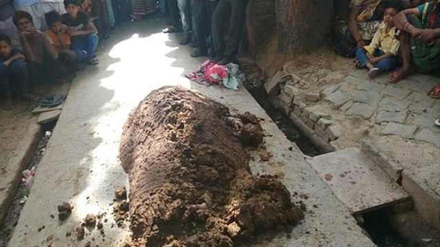 Pes doğrusu dedirten haber! Yılan ısırdı inek dışkısına gömdüler öldü