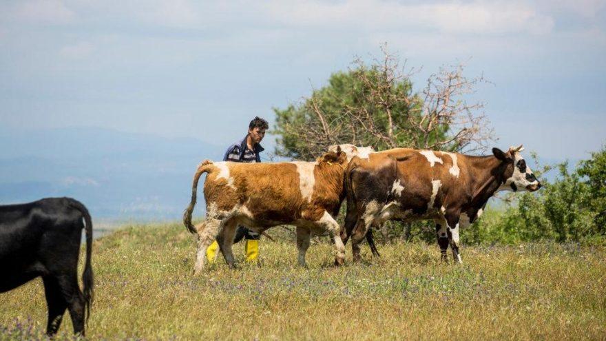 Kırsal kesimde 'kist hidatik hastalığı' riski