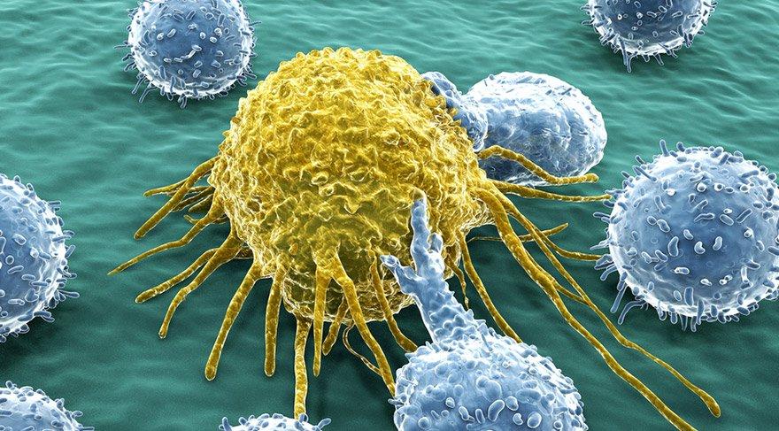 kanser-shutter
