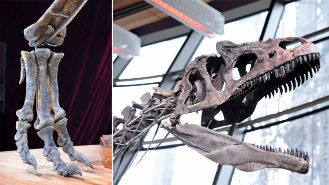 dinozor-aa-2