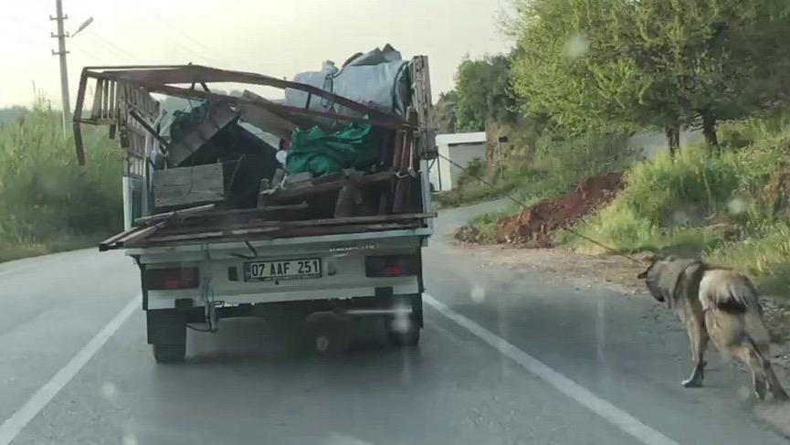 Köpeği kamyonetin arkasına bağlayıp çeken sürücüye ceza