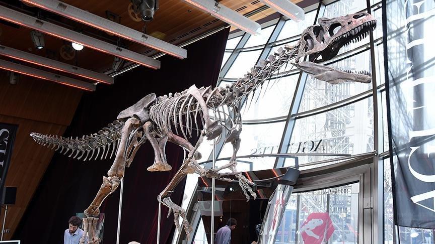 Tartışmalı açık artırma gerçekleşti… İşte dinozorun fiyatı…