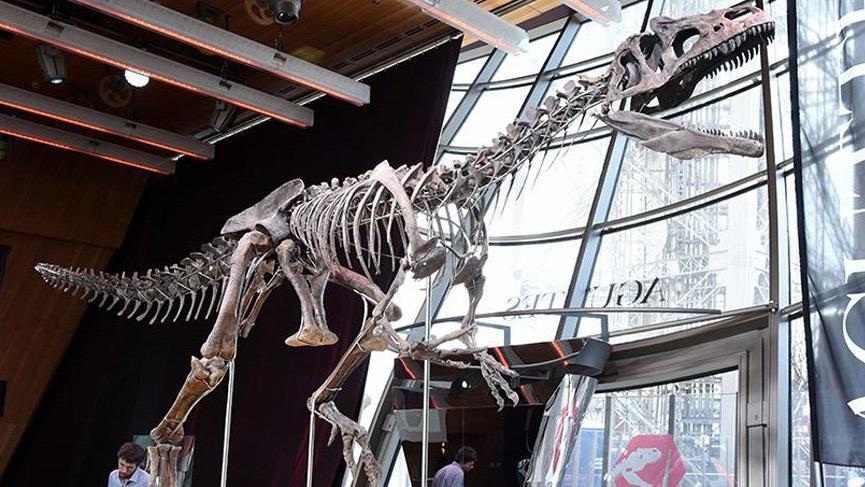 150 milyon yıllık dinozor iskeletine 2.36 milyon dolar