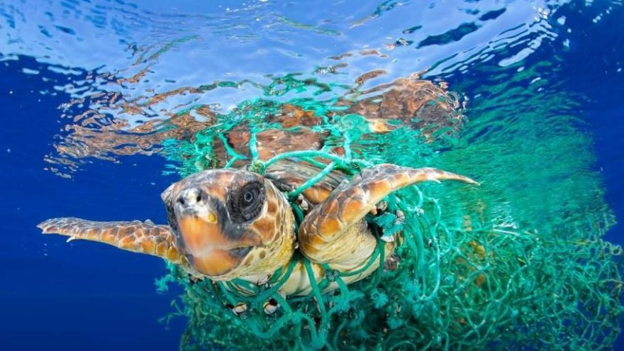 WWF: Akdeniz'e Türkiye'den günde 144 ton plastik atılıyor