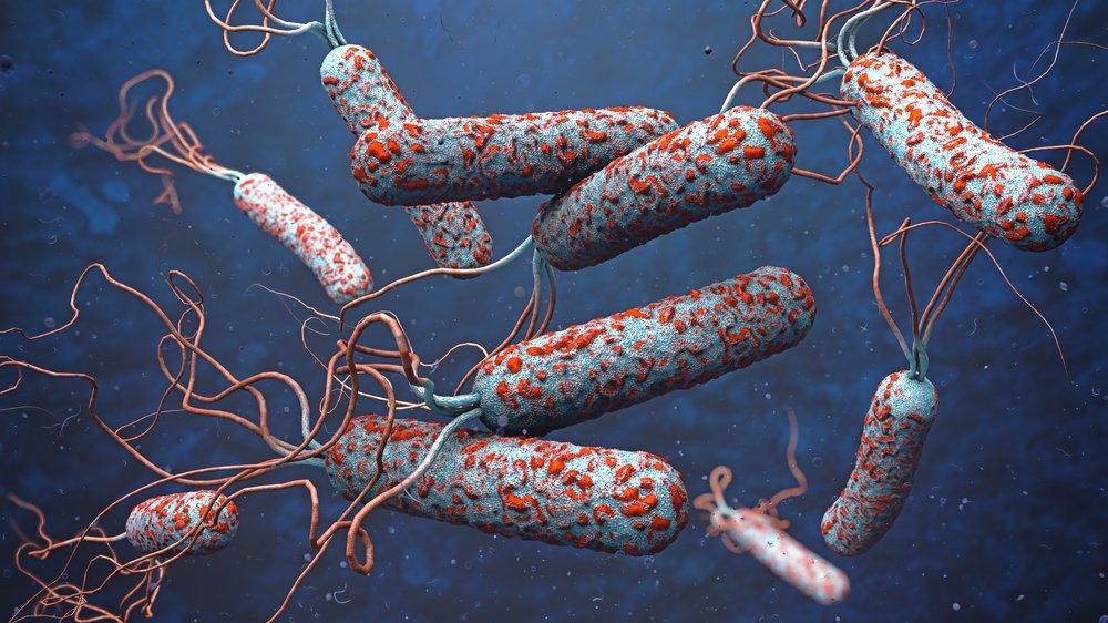 Nijerya'da 19 kişi kolera nedeniyle öldü