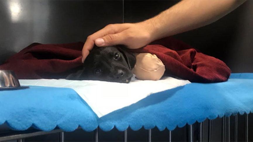 Bacakları kesilen yavru köpek kurtarılamadı