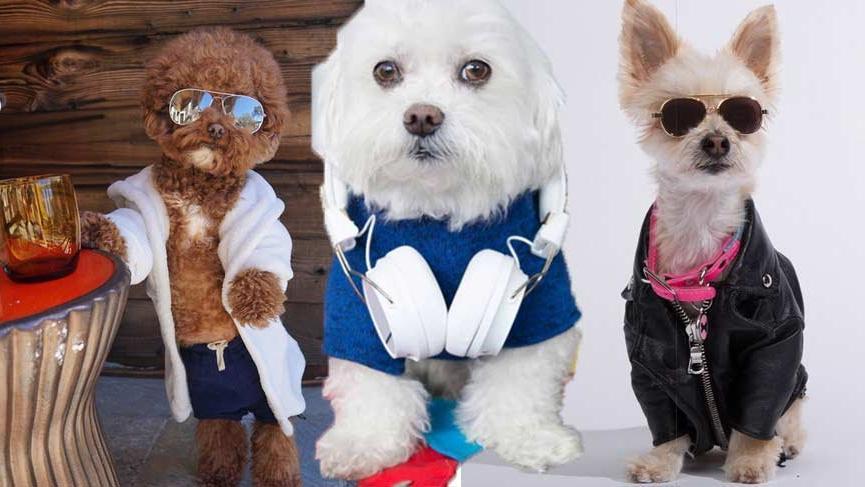 Instagram'da milyonlarca takipçisi olan köpekler