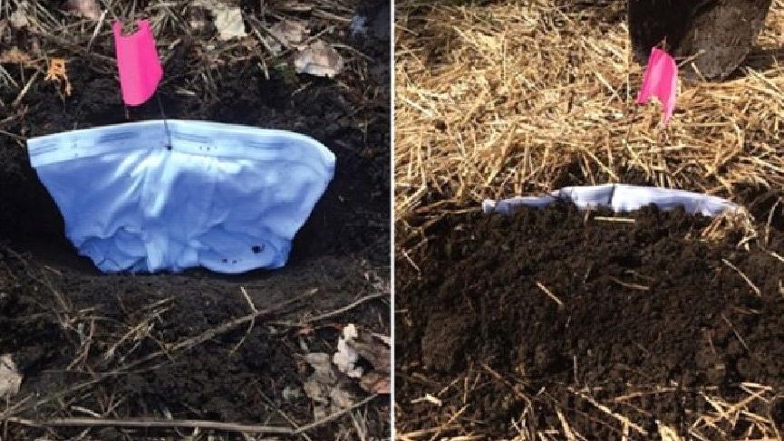 İç çamaşırınızı toprağa gömmek bakın ne işe yarıyor?