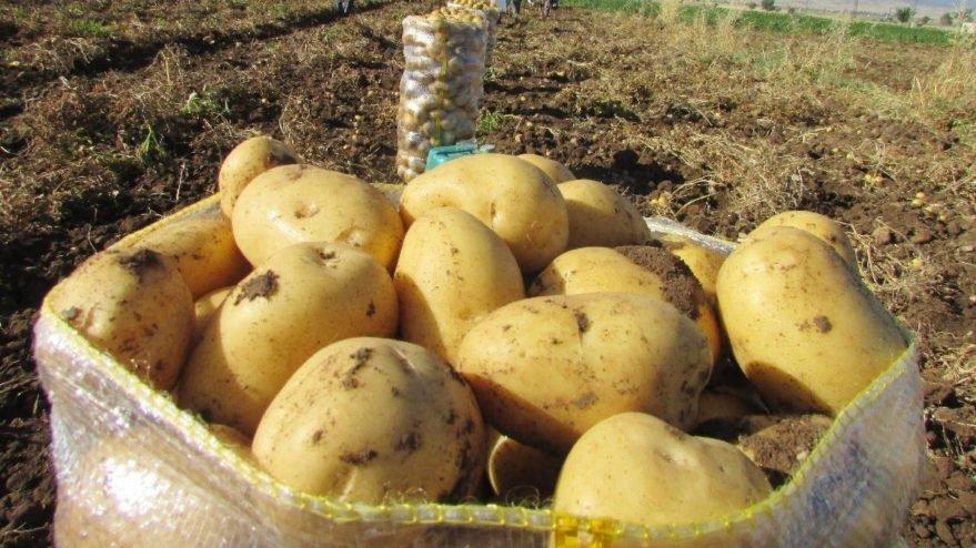 Çiftçi elindeki patatesi satamıyor
