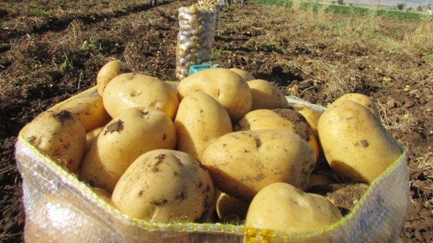 Zeybekci: Soğan ve patates ithalatına müsaade edeceğiz