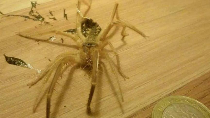 Bodrum'da etyiyen örümcektedirgin etti
