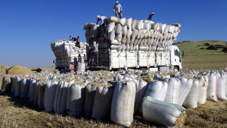 Samanın fiyatı, geçen yıla oranla yüzde 100 arttı