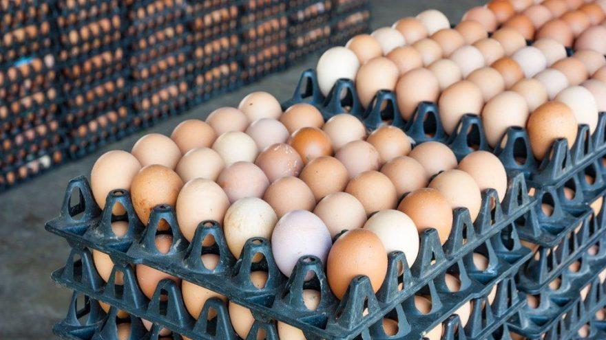 Hollanda'da 'ilaçlı yumurta' raporu yayımlandı