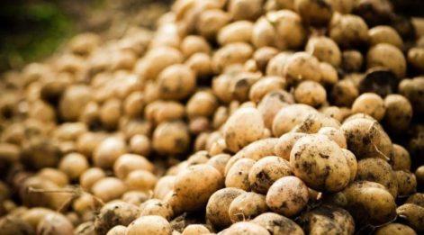 Patates fiyatı bizi hasta etti!