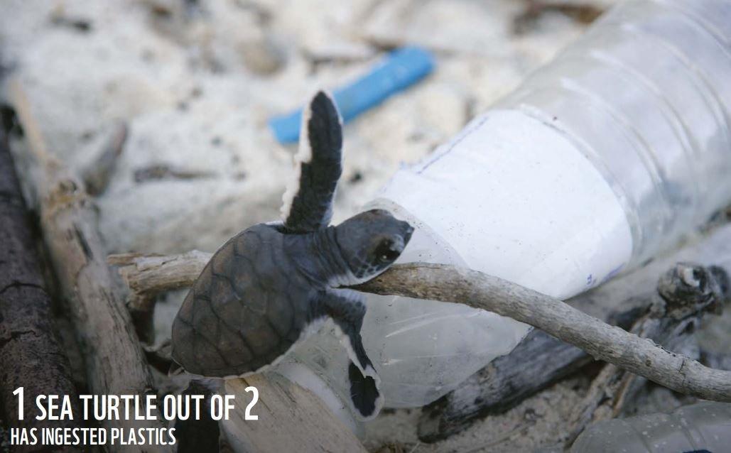 Raporda, her 2 deniz kaplumbağasından 1'inin plastik kirliliğe maruz kaldığı aktarıldı.
