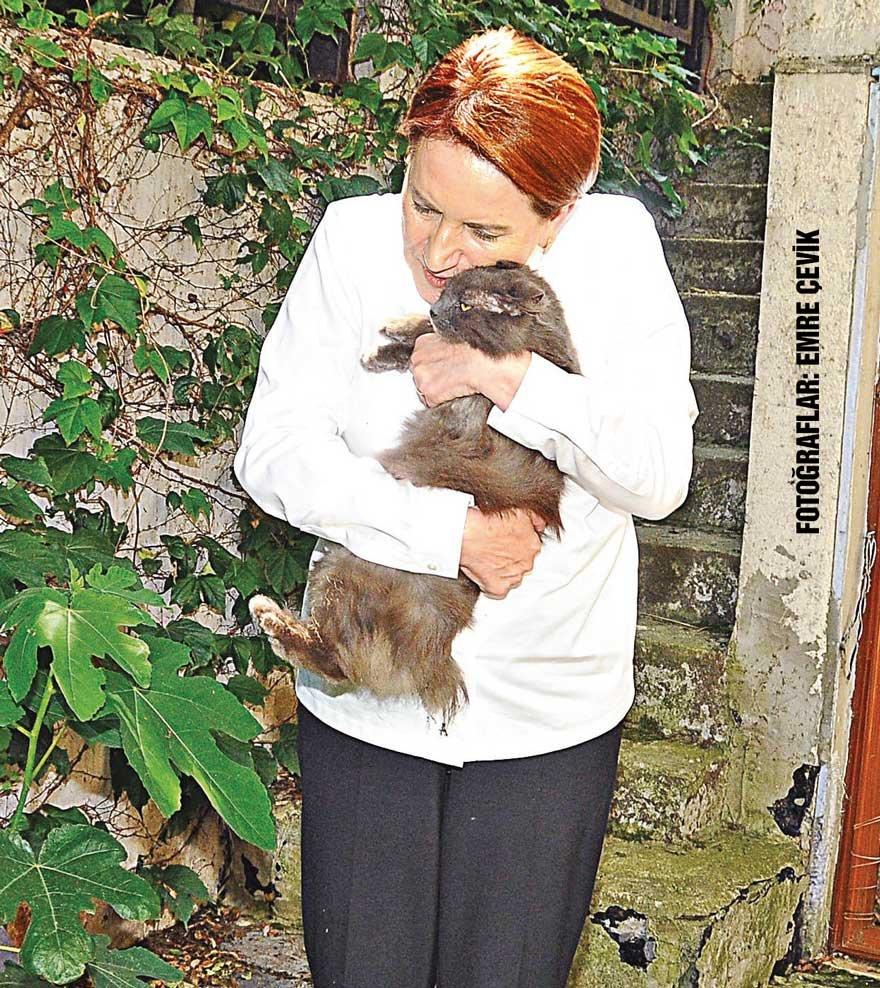 """Akşener, """"Badem"""" ismini verdiği kediyi kuyruğu kopmuş halde bulup eve getirmiş."""