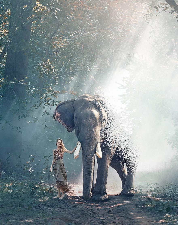 elephant-son