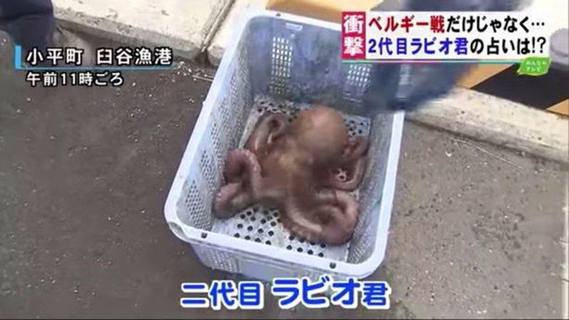 Japonların tüm maçlarını bilen ahtapotu kehanetleri de kurtaramadı!