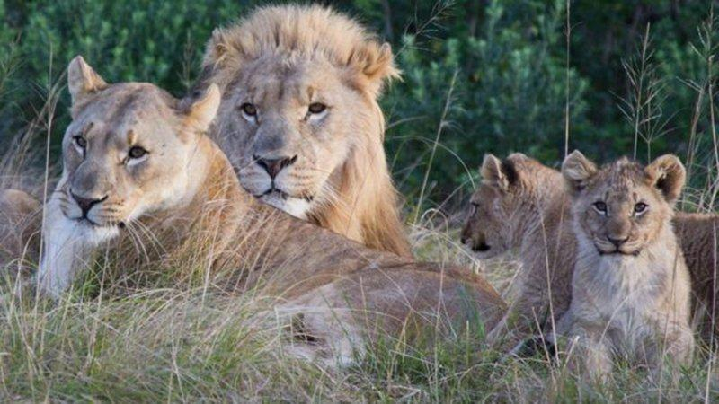 Ava giderken avlandılar… Kaçak avcıların feci sonu