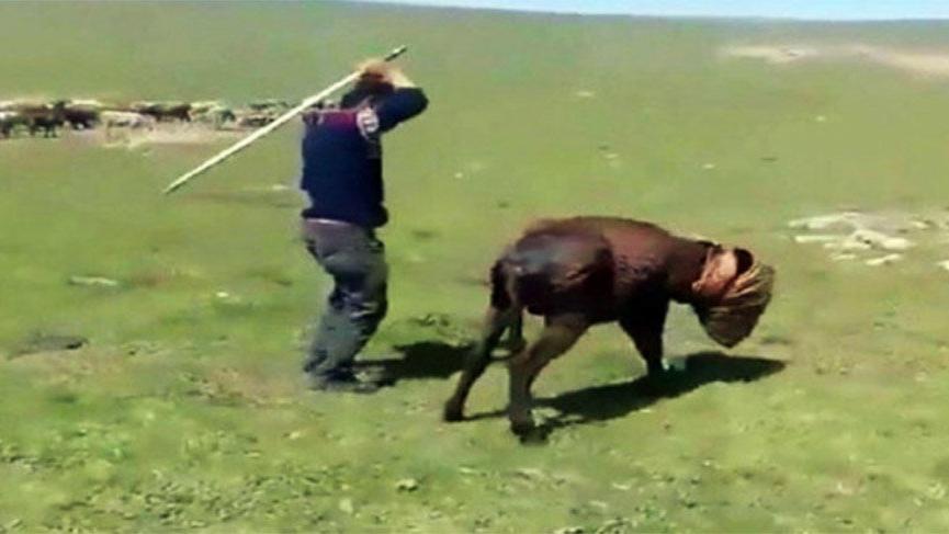 Kars'ta eşeklere eziyet eden kişi yakalandı