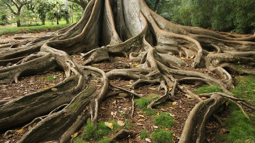Ağaçlar gizlice birbirleriyle konuşabiliyor 'ticaret yapıyor' hatta savaşıyor