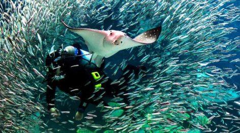 Hayranlık uyandıran deniz canlılarını görebileceğiniz dalış noktaları