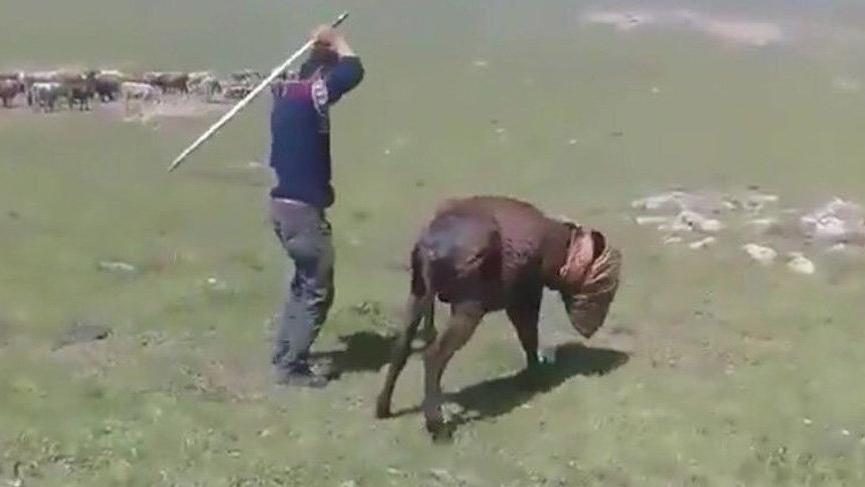 Eşeğe işkence yapan çobana 1250 TL ceza