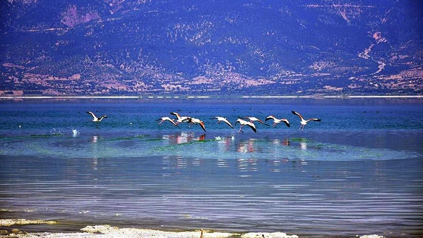 Burdur Gölü'nün son konukları flamingolar